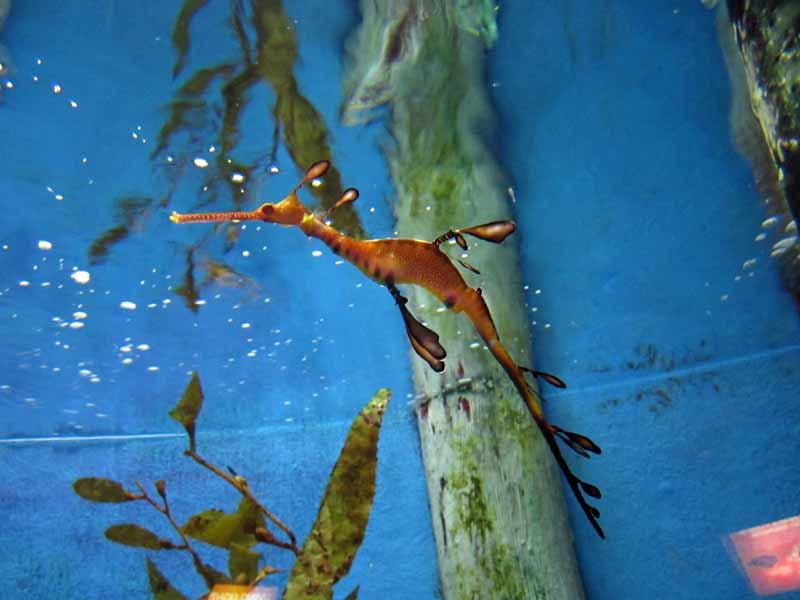 A seahorse.