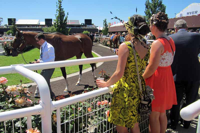 Melbourne Cup Parade Ring.