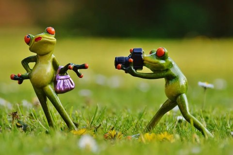 A frog taking a picture of another frog.