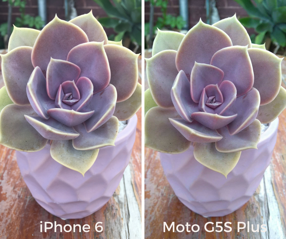 Side by side photos of a potted succulent taken with an iPhone 6 and a Moto G5S Plus.
