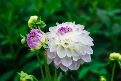 Nature natur природа flower Blume цветы leaves green grün зелень листья white