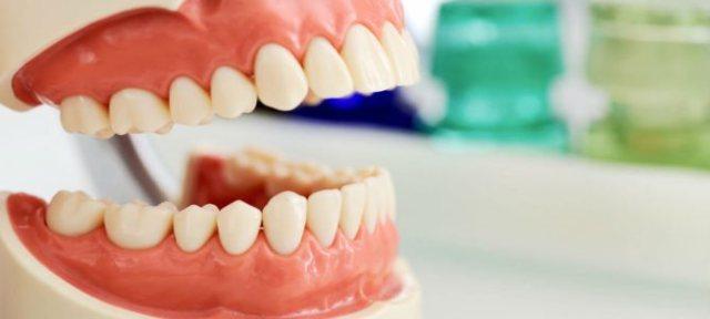 Зубы взрослого человека