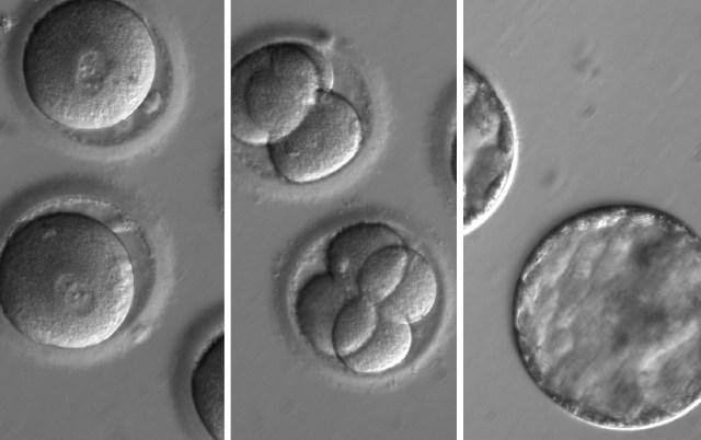 Embryo editing