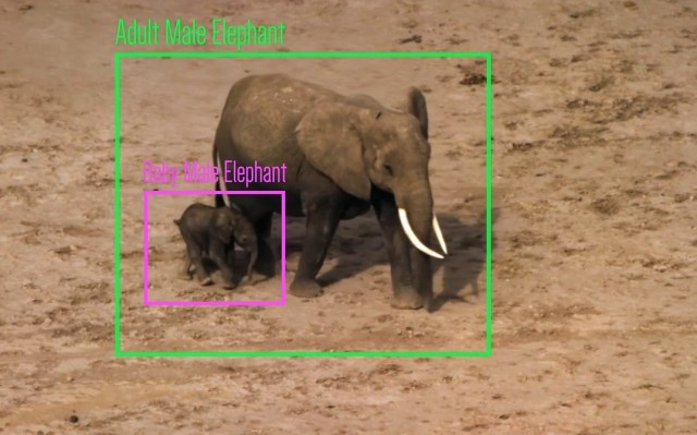Elephant identification with AI