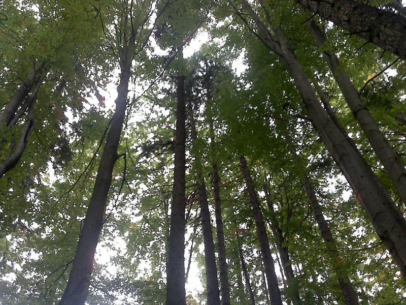Copacii vorbesc cu timpul