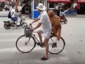 Golden Retriever on a bike
