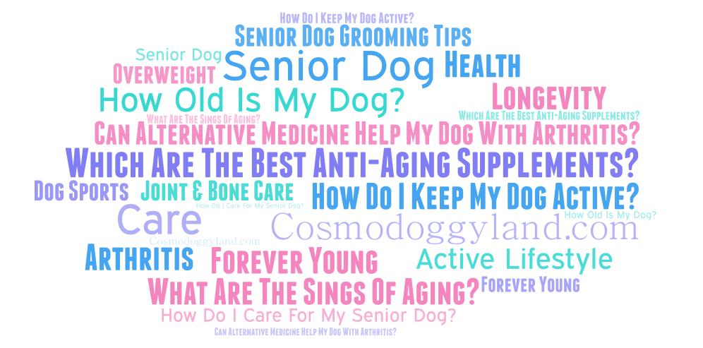 Por siempre joven: Todo acerca de los perros mayores