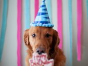 Golden Retriever Birthday