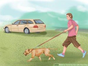 Dog Travel by Car. Roadtrip