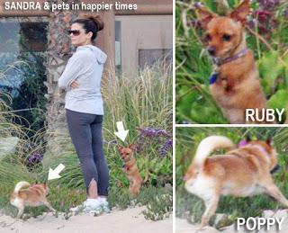 Sandra Bullock con sus perros especiales, Popy, Ruby y BeBe (no en la foto).www.examiner.com
