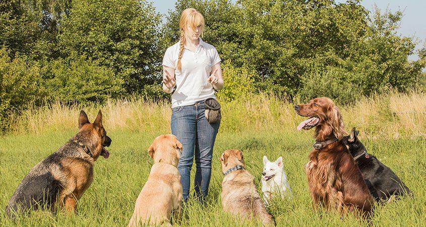 Animal Behaviour: Obedience & Health Image