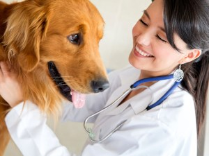 Veterinary Doctor with Golden Retriever