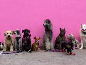 ¿Qué perro elegir?