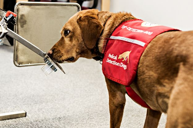 Cancer and Medical Detection Dog Training