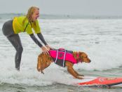 Dog Surfing with Disabled Girl