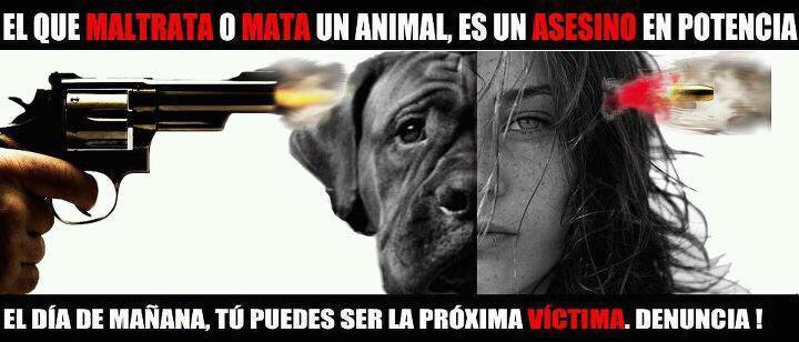 Poster violencia animal