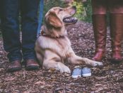Dog Family Maternity Photos