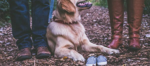 Dog Family and Parenting