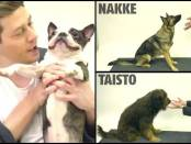 Magician Surprises Dogs