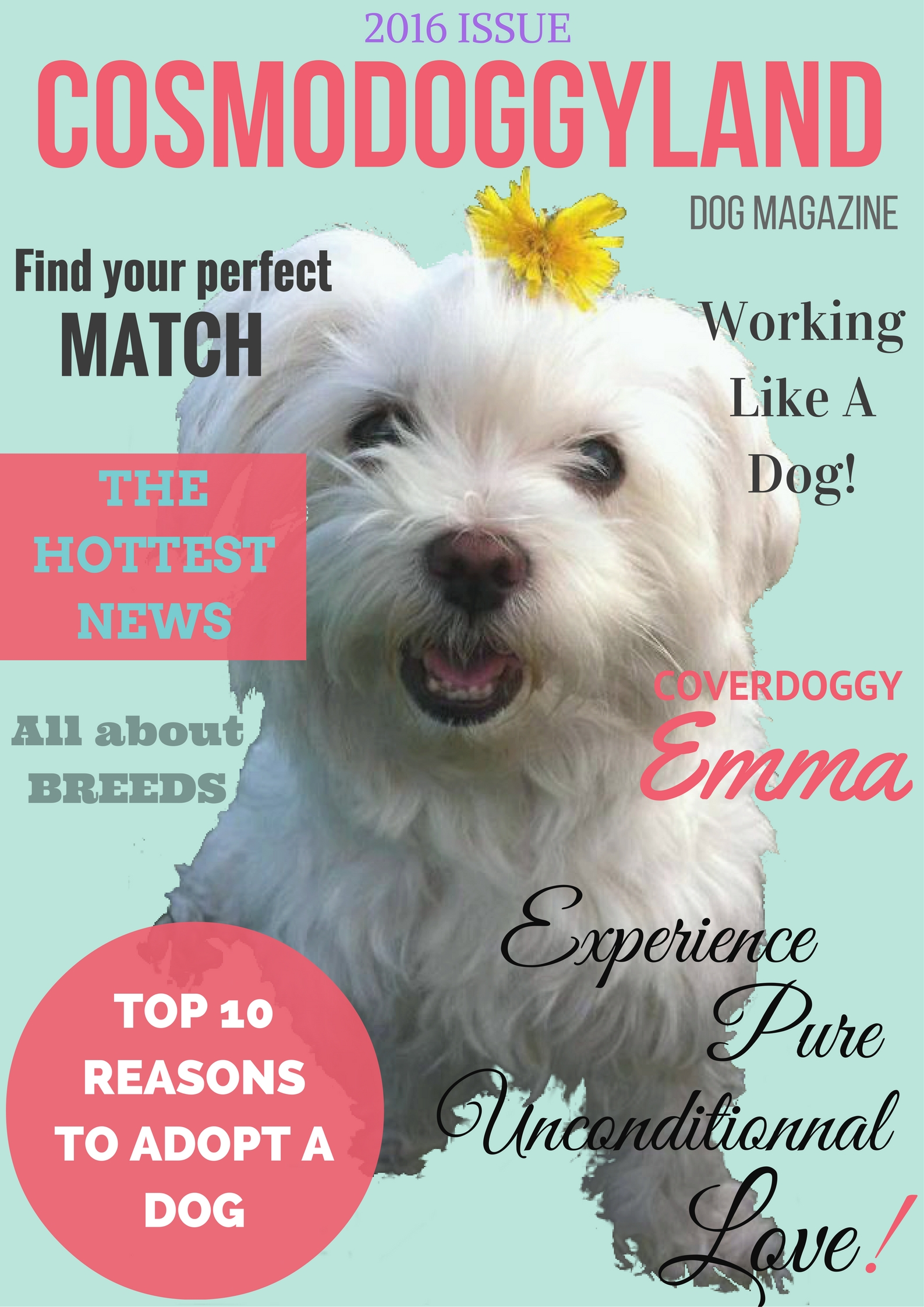 Canine Magazine Cover (English). Be part of the pack and help us make a more dog friendly world