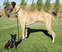 1__#$!@%!#__Big_and_little_dog_1