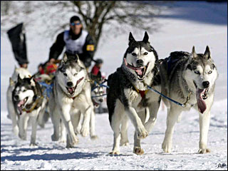 090106_sled_dogs