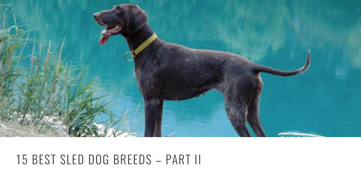 best-sled-breeds-2-header.png