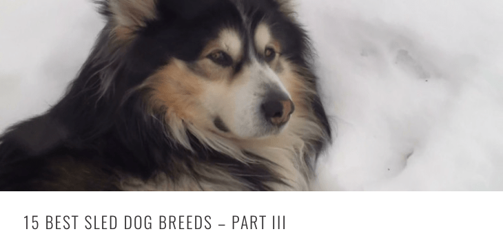 best sled breeds 3 HEADER