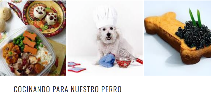 receta fácil para tu perro. Cosmodoggyland