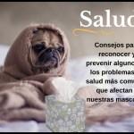 Salud. Consejos para reconocer y prevenir algunos de los problemas de salud más comunes que afectan a nuestras mascotas.