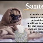 Santé. Conseils pour reconnaître les problèmes de santé les plus communs chez nos animaux de compagnie.