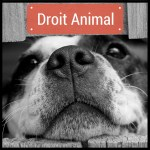 Droit Animal