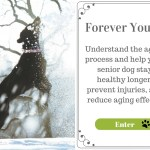 Forever Young. Understand the aging process and help your senior dog stay healthy longer, prevent injuries, and reduce the aging effects. Enter