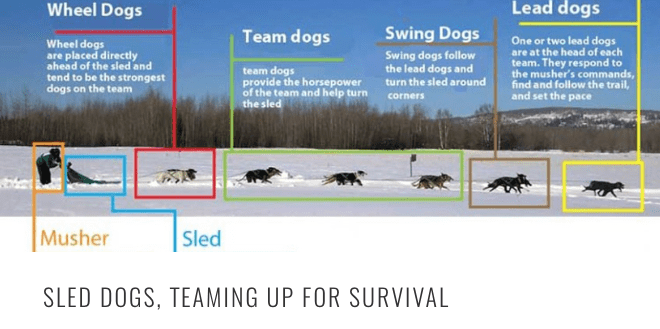 sled-dog-teaming-header.png