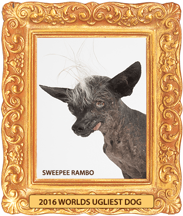 Sweepee_Rambo_2016_Worlds_Ugliest_Dog_Framed-360