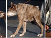 Ugliest Dog Gallery