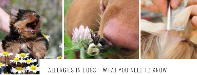 alergic-2Bdogs-2B1-2Bheader.png