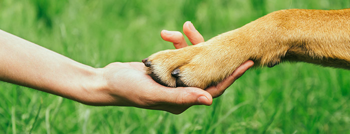Dog Paw in Human Hand