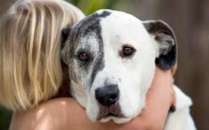 Young Girl Hugging Large Dog