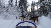 Cosmodoggyland - Dog sledding - Musher Interview