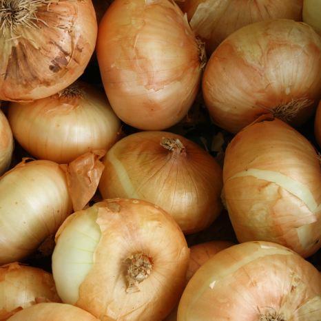 Cebollas - Cosmodoggyland