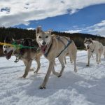 Interview With Sarah & Dan From Snow Buddy Dog Sled Tours