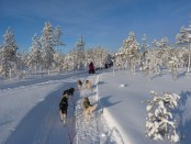 Dog sledding adventures in Swedish Lapland - Cosmodoggyland Interview Series