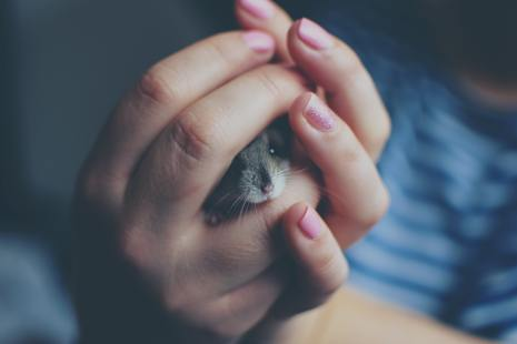 Woman holding hamster