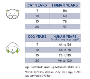 Dogs and cats ages in human years