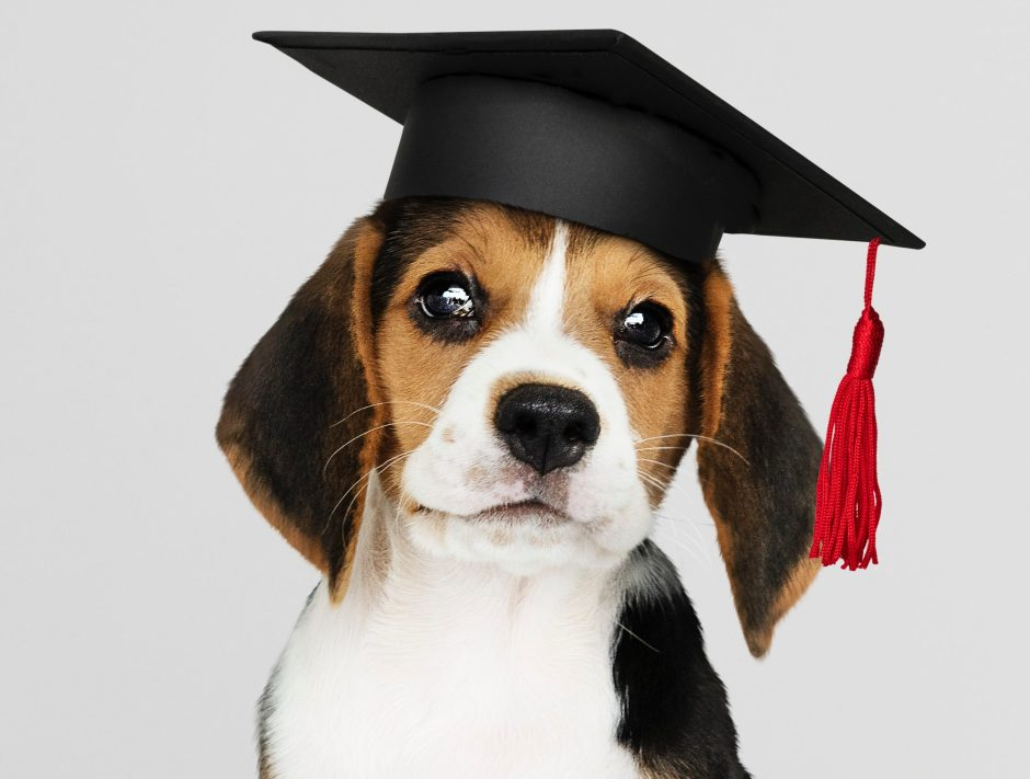 How to Train a Puppy and Adult Dog Training Image