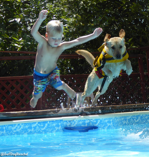 Therapy dog swimming with boy