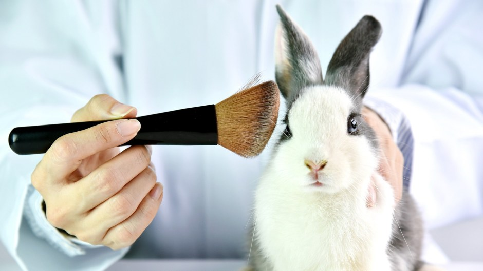 Bunny and make up brush - cosmetics testing on animals