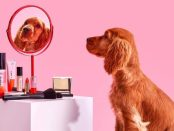 Dog in front of cosmetics and mirror