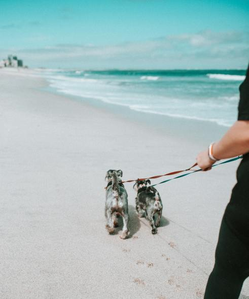 Walking on the beach with two dogs on a leash